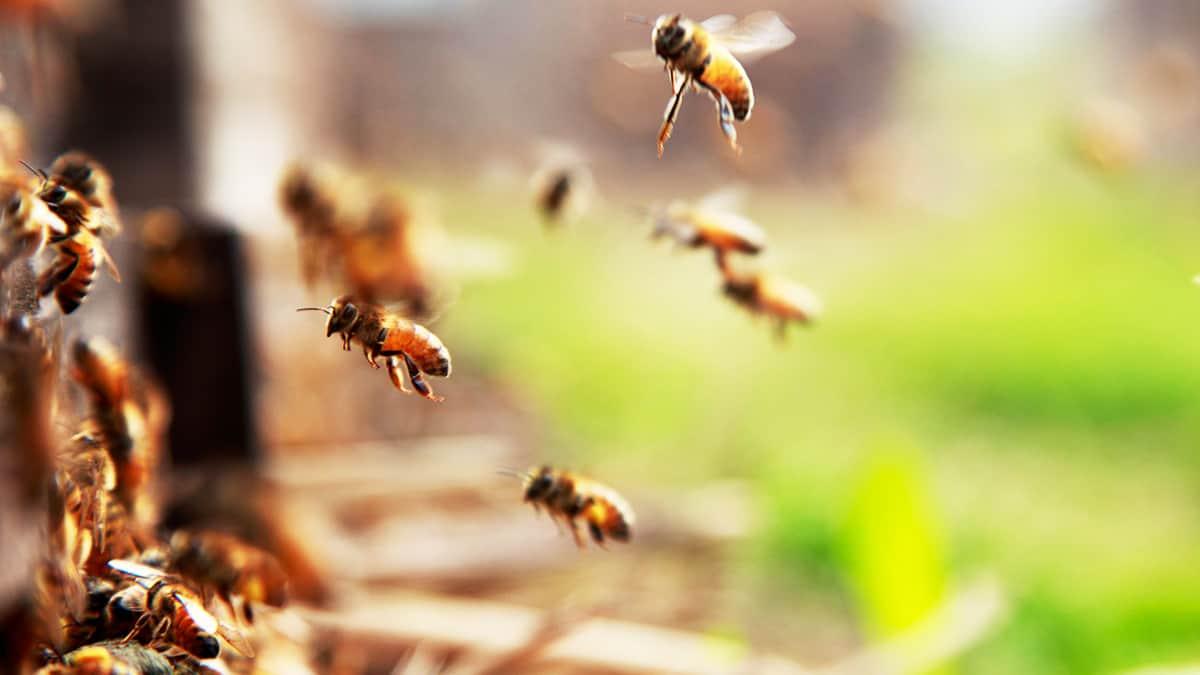 هارفارد-بزنس-ريفيو-صوت-النحل